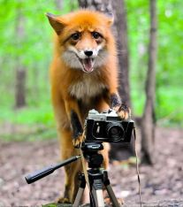 animais-gostam-de-fotografia-26