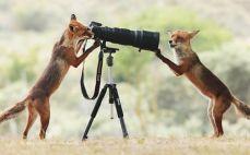 animais-gostam-de-fotografia-37