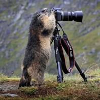 animais-gostam-de-fotografia-40