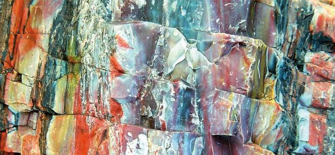 Image result for colorful petrified wood