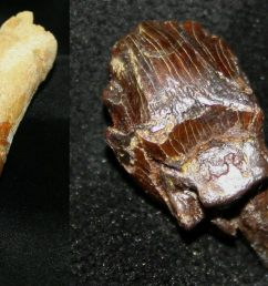 various dinosaur teeth [ 1800 x 711 Pixel ]