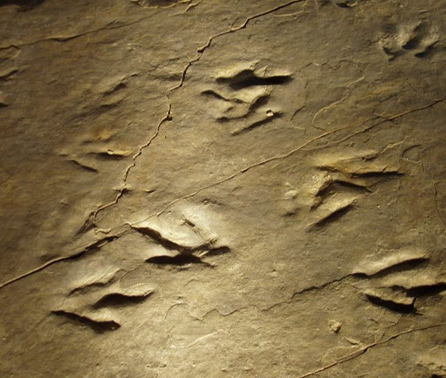 The Connecticut Valley Is Home To One Of The Most Impressive Dinosaur Track Sites In The World Tracks Of Many Different Types Of