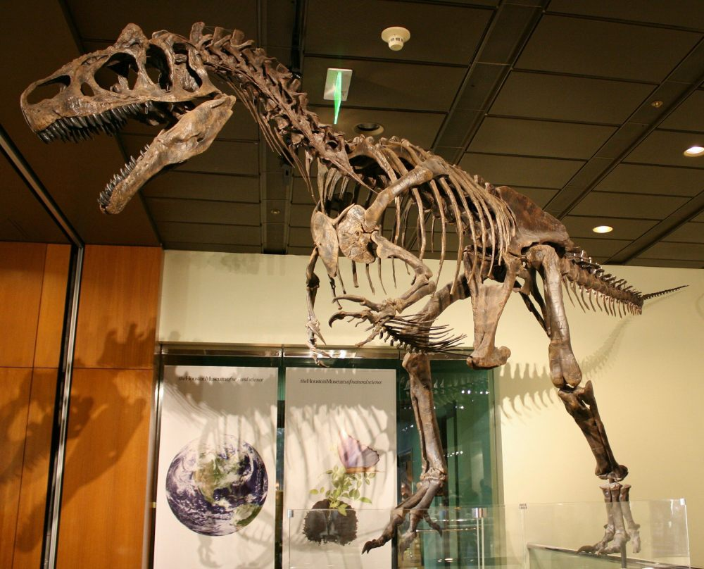 medium resolution of mounted skeleton of big al at the houston museum of natural science