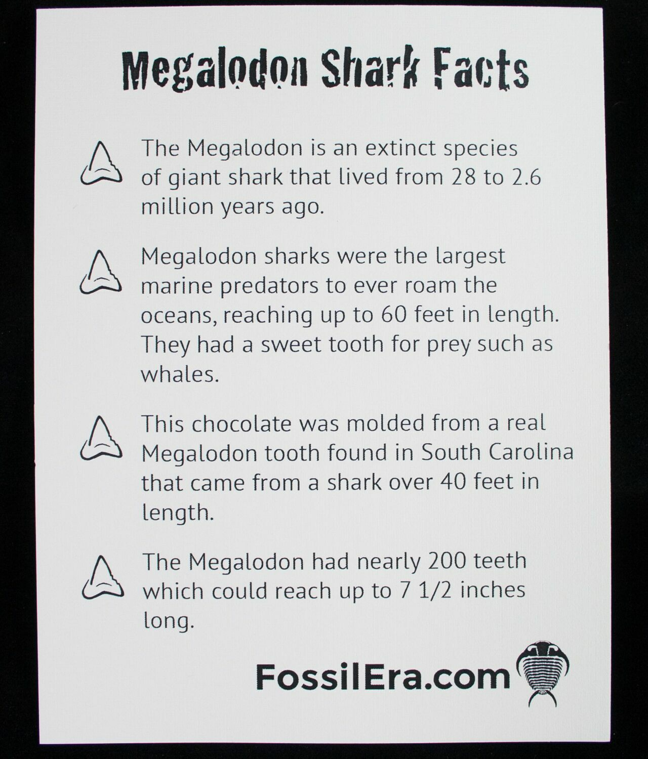 Milk Chocolate Megalodon Shark Tooth For Sale