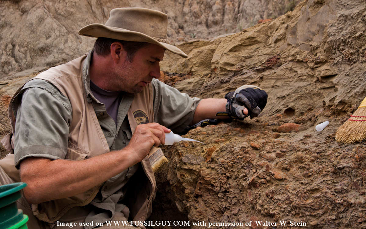Fossilguy Com Questions For A Paleontologist Walter W Stein