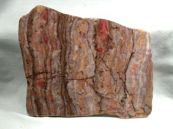 Stromatolite Fossils Michigan