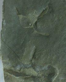 Eocene Lakeside Trackway Fossil Scene