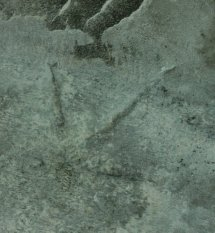 Eocene Lakeside Trackway Scene