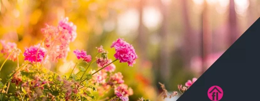 garden image.