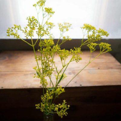 Patrinia flowers