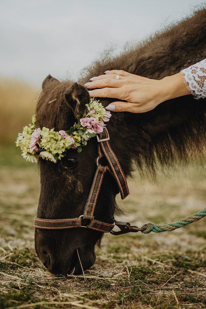Konie-sesja-slubna-MR-031