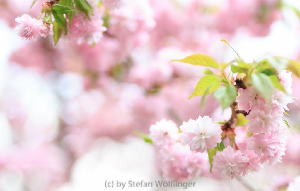 Setagaya – japanischer Garten in Wien