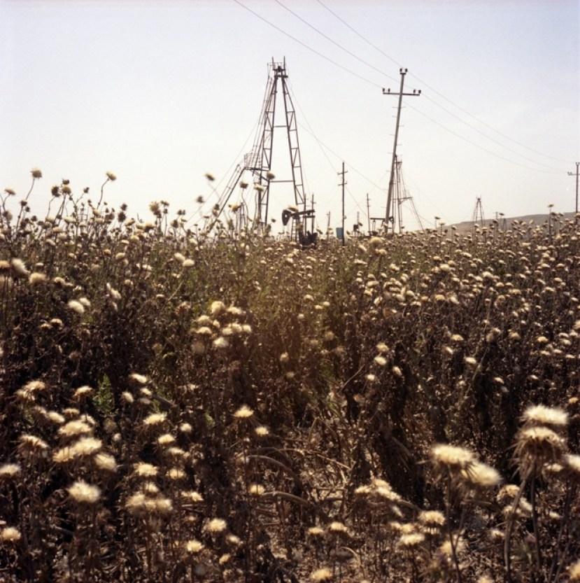 Dog-roses in the oil field. Balakhani village. Baku, Azerbaijan. 2010