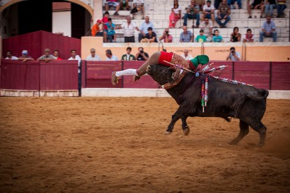 The face catch: A member of the Évora forcados performes a face catch at Barbarela style, grabbing the bull by the neck, Reguengos de Monsaraz, Portugal.