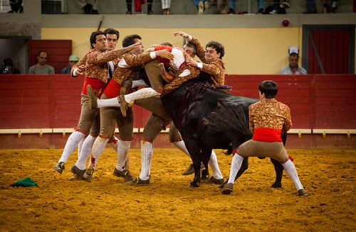 The Reunion: Forcado leads the bull after the 'pega' or face catch and is helped by the rest of the group on the Évora Arena, Évora, Portugal.