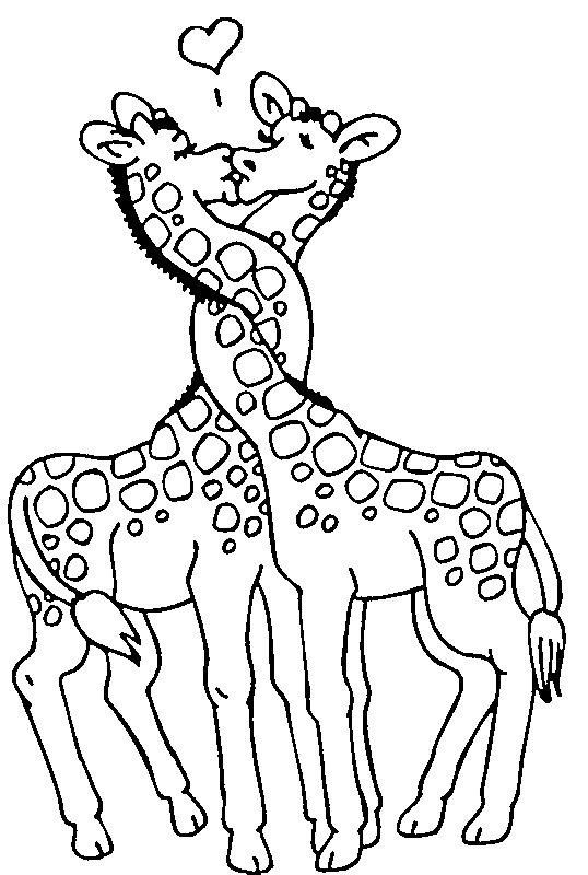 Disegno da colorare bacio tra giraffe