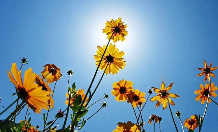 背光拍攝可以拍出花朵的紋理和透視感覺,在藍天下拍攝特別漂亮。 (Photo by {link:https://www.flickr.com/photos/craigoneal/2465651761}Craig ONeal{/link})