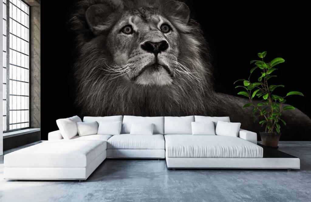 Behang met een leeuw op een zwarte achtergrond  Fotobehang