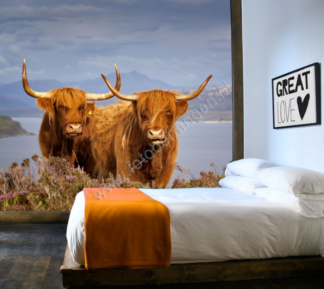 Vlies fotobehang Schotse koeien  Fotobehangennl