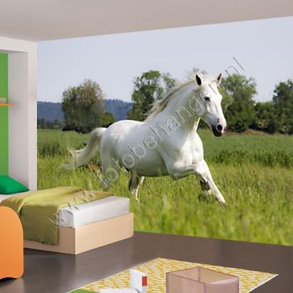 Vlies fotobehang Wit paard  Fotobehangennl