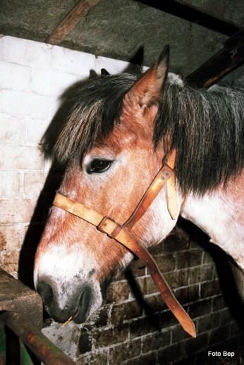 Zelf de paarden zijn treurig.