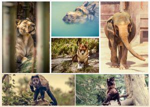 Collage thema