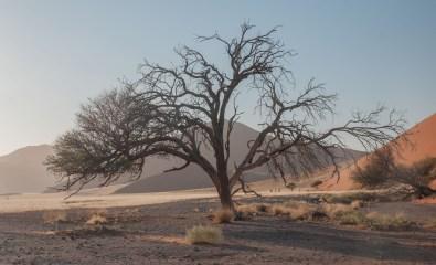 Fritz-Namib-Naukluft-87-Sonnenaufgang