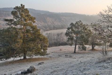 Winter_Frostiger-Morgen_Michael_Kolk