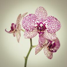 Orchideenpracht - Torsten Christ