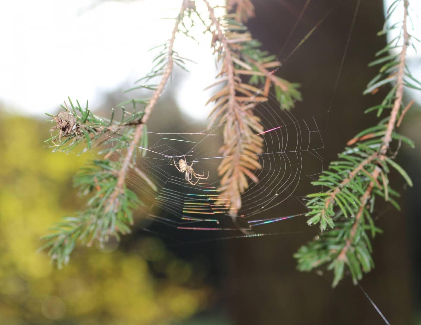 Spinne im Herbstlicht - von Andrea Meyerhöfer