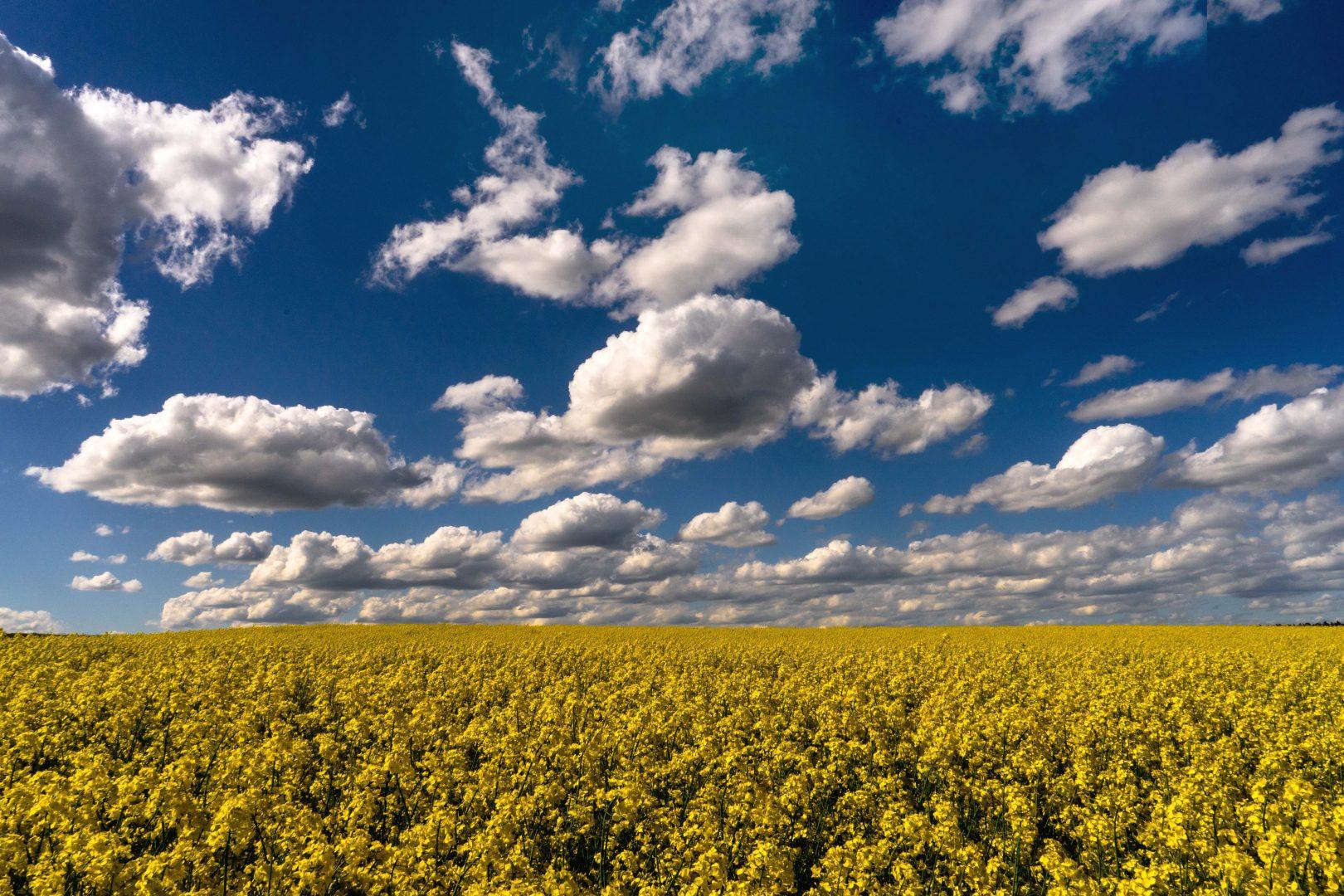 weissblau und gelb - von Karl Eißner