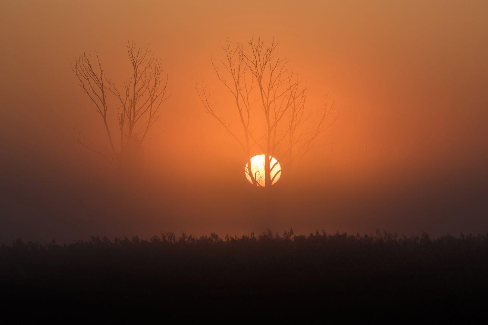 Sonnenaufgang - von Friedrich Weigel
