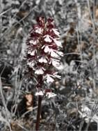 Orchideenexkursion - Ernst Otto Cronauer