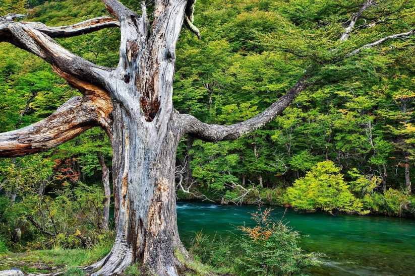 Fotoexplorer-Marcio-Cabral-ARG-e-CHI-Patagonia-022