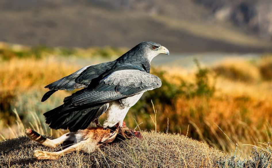 Fotoexplorer-Marcio-Cabral-ARG-e-CHI-Patagonia-050