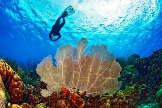 Fotoexplorer-Marcio-Cabral-HOL-Bonaire-002