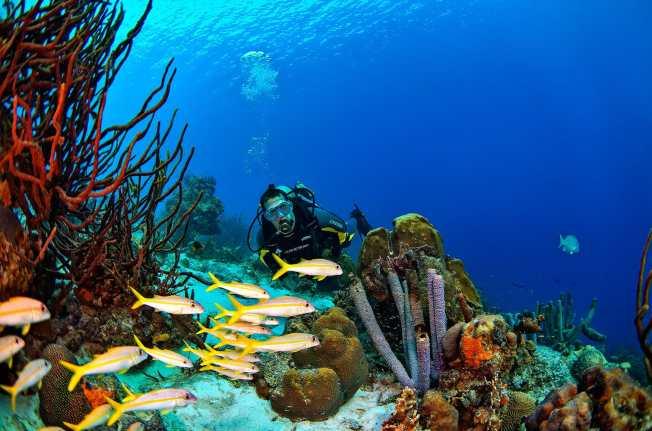 Fotoexplorer-Marcio-Cabral-HOL-Bonaire-008