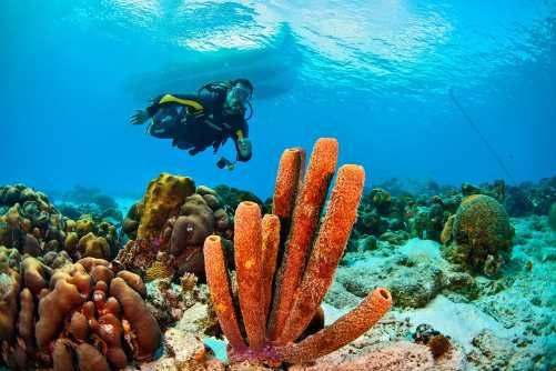 Fotoexplorer-Marcio-Cabral-HOL-Bonaire-009
