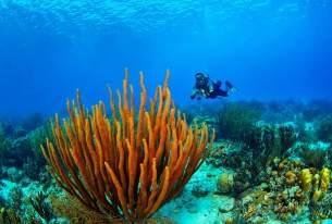 Fotoexplorer-Marcio-Cabral-HOL-Bonaire-012