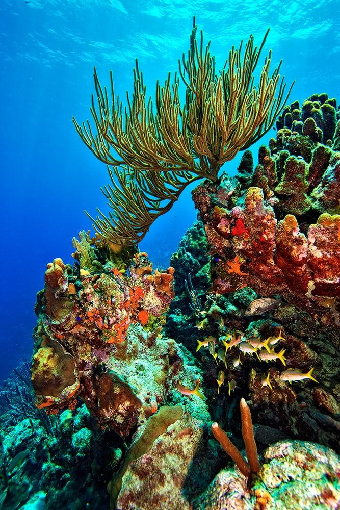 Fotoexplorer-Marcio-Cabral-HOL-Bonaire-015