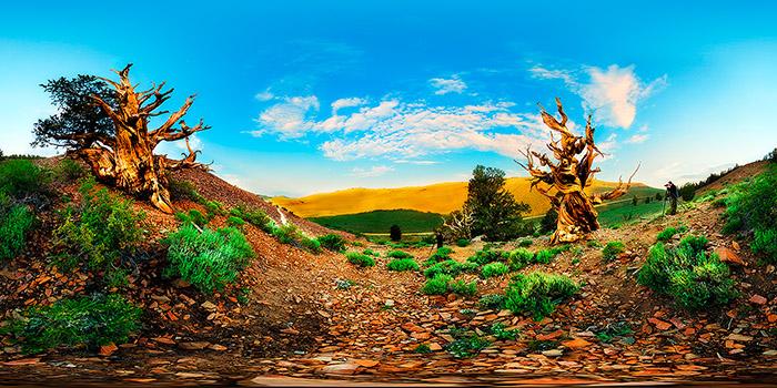 Fotoexplorer-Marcio-Cabral-360-EUA-CA-Bishop-Bristlecone-Pine-001