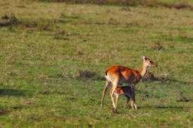 fotoexplorer_marcio_cabral_pantanal_03
