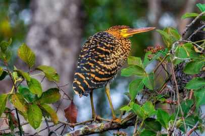 fotoexplorer_marcio_cabral_pantanal_19