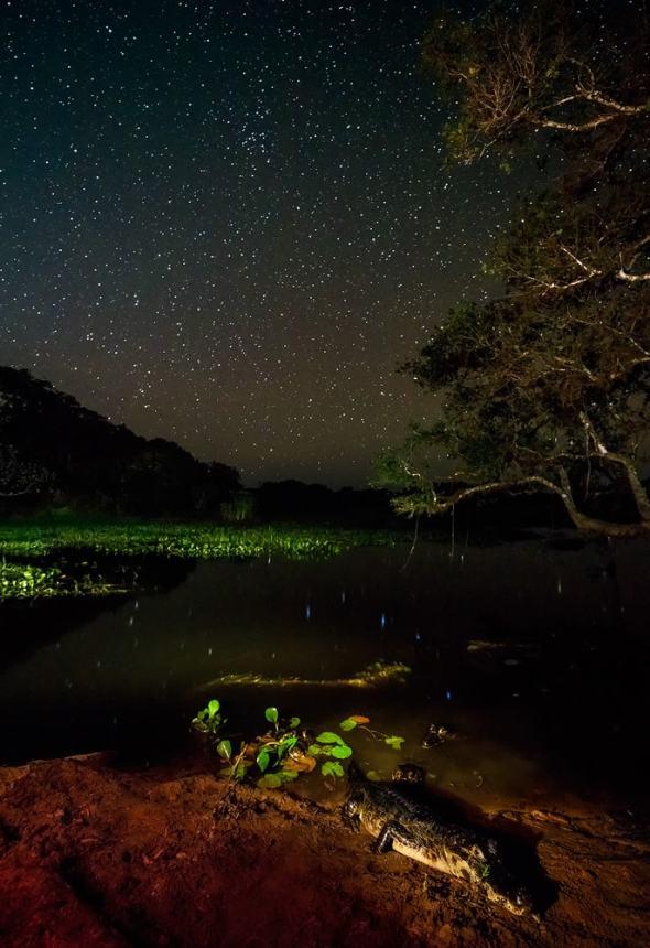 fotoexplorer_marcio_cabral_pantanal_28