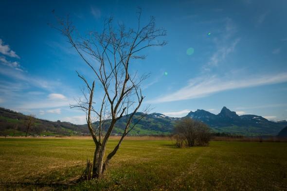 Moorlandschaft am Lauerzersee