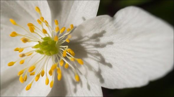 Olympus OM-D E-M5 - Blumenmakro mit Dörr Zwischenringe aufgenommen