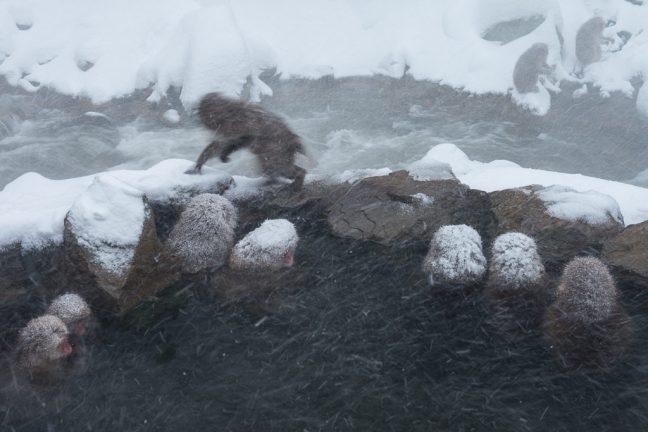 sneeuwmakaken in warme bron