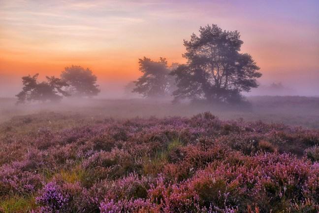 Sprookjesachtig landschap op de Spinsterberg