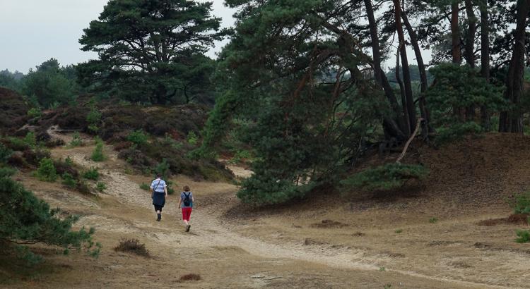 heerlijk wandelen in de Kale Duinen oftewel het Aekingerzand