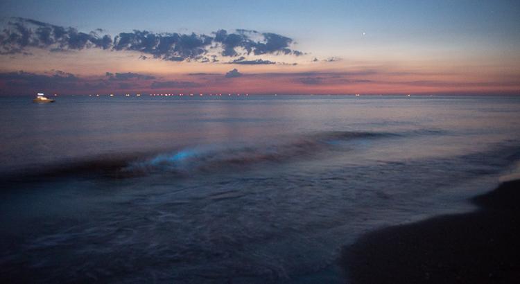 zeevonk en het lichten van de zee